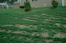 Common Lawn Maintenance Mistakes that North Shore Residents Make